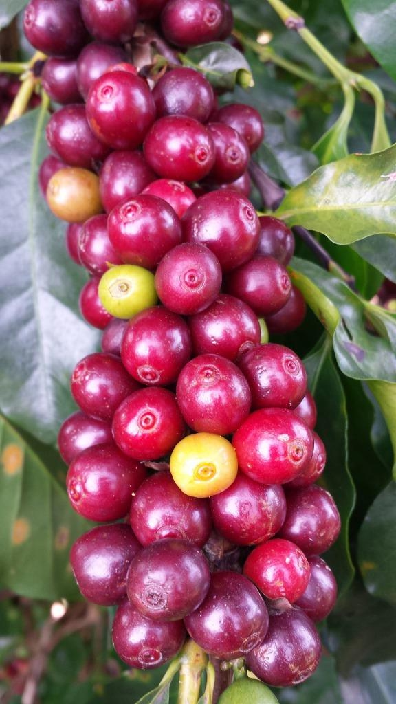 s_coffee-1009800_1920
